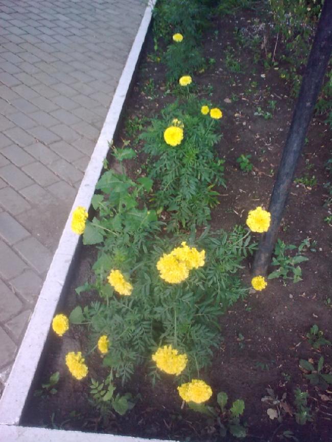 И этот цветок уже не одинок