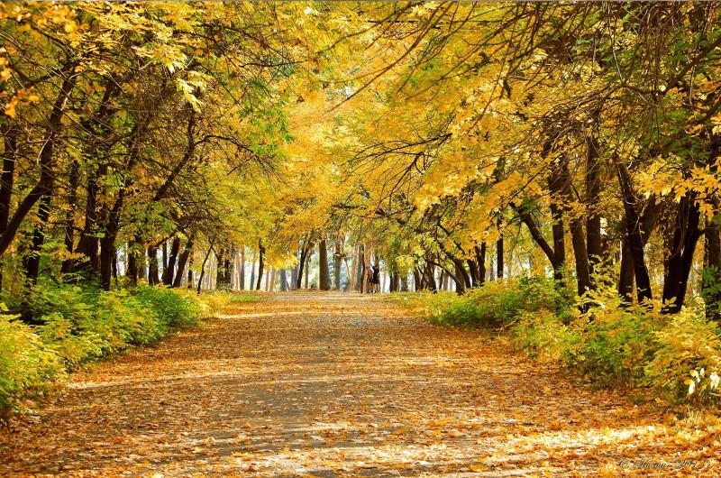 Городской парк, фото Сергея Килина