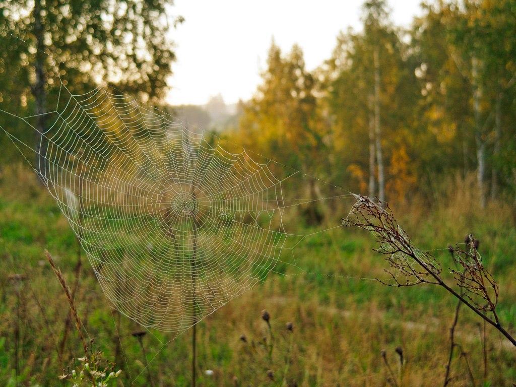 Фото с просторов паутины