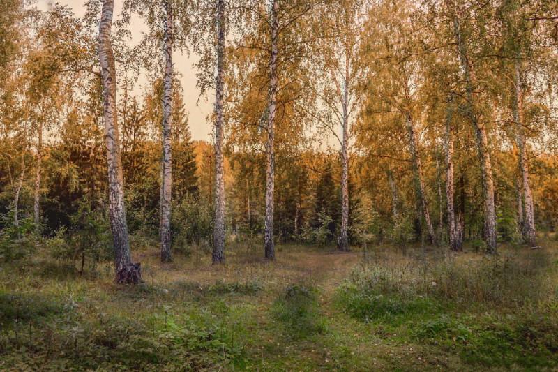 Фото Александра Сазонова