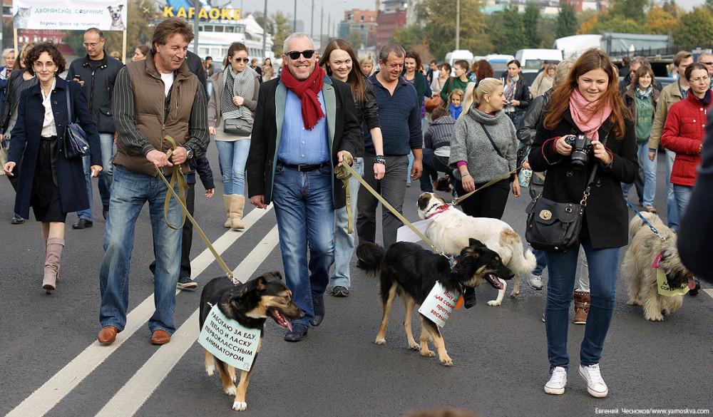 Леонид Ярмольник и Андрей Макаревич с участниками акции по пристройству собак из приюта (2012). Позднее Крымская набережная стала пешеходной.