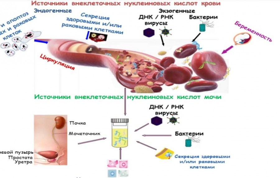 Как сделать анализы на раковые клетки 516