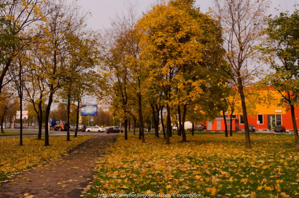 Золотая Осень В Ботаническом саду им Цецина  17  10 - 2017  ! (1 of 35).jpg