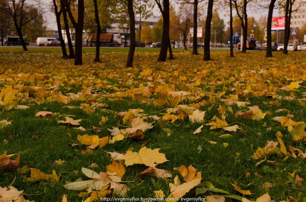 Золотая Осень В Ботаническом саду им Цецина  17  10 - 2017  ! (2 of 35).jpg