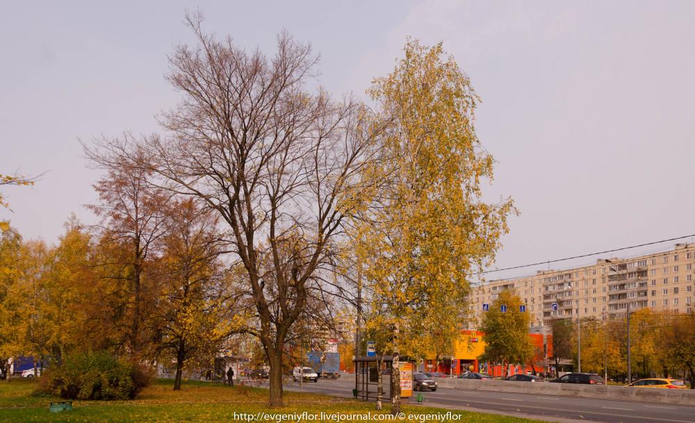 Золотая Осень В Ботаническом саду им Цецина  17  10 - 2017  ! (5 of 35).jpg