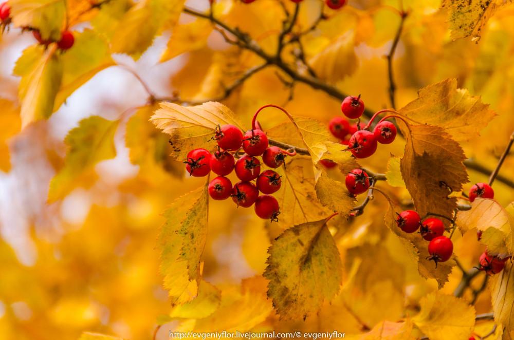 Золотая Осень В Ботаническом саду им Цецина  17  10 - 2017  ! (26 of 35).jpg
