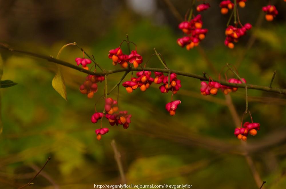 Золотая Осень В Ботаническом саду им Цецина  17  10 - 2017  ! (30 of 35).jpg