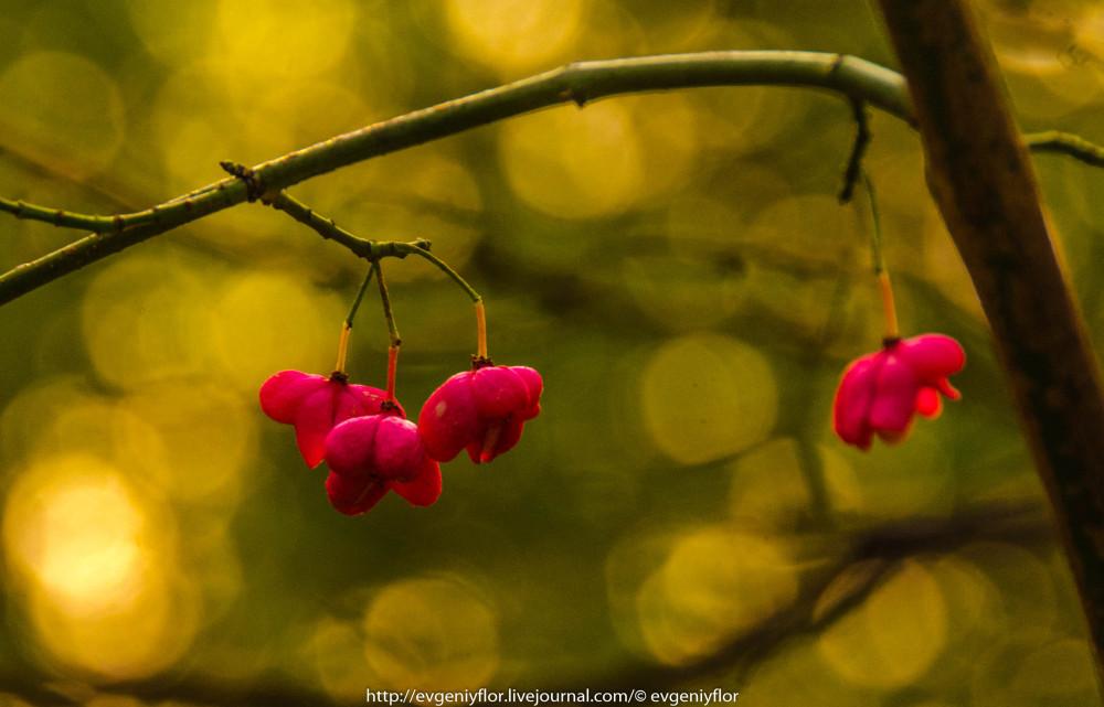 Золотая Осень В Ботаническом саду им Цецина  17  10 - 2017  ! (34 of 35).jpg