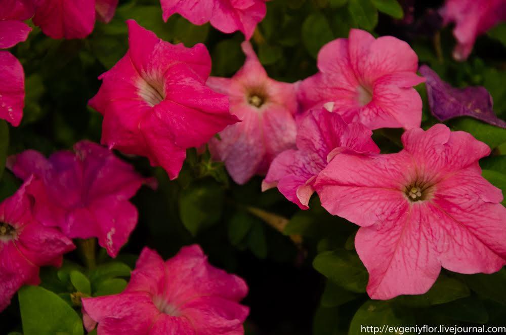 Цветочная прогулка в ГУМ _ (23 of 71).jpg