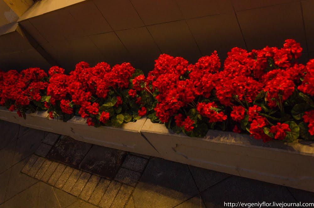 Цветочная прогулка в ГУМ _ (63 of 71).jpg