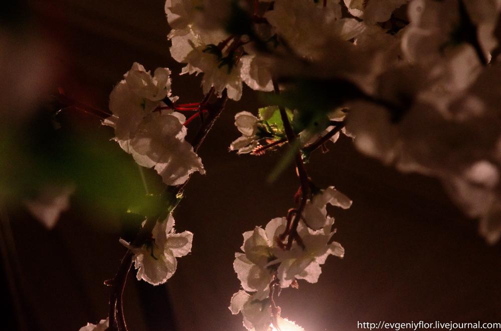 Цветы из разных мест  (6 of 19).jpg