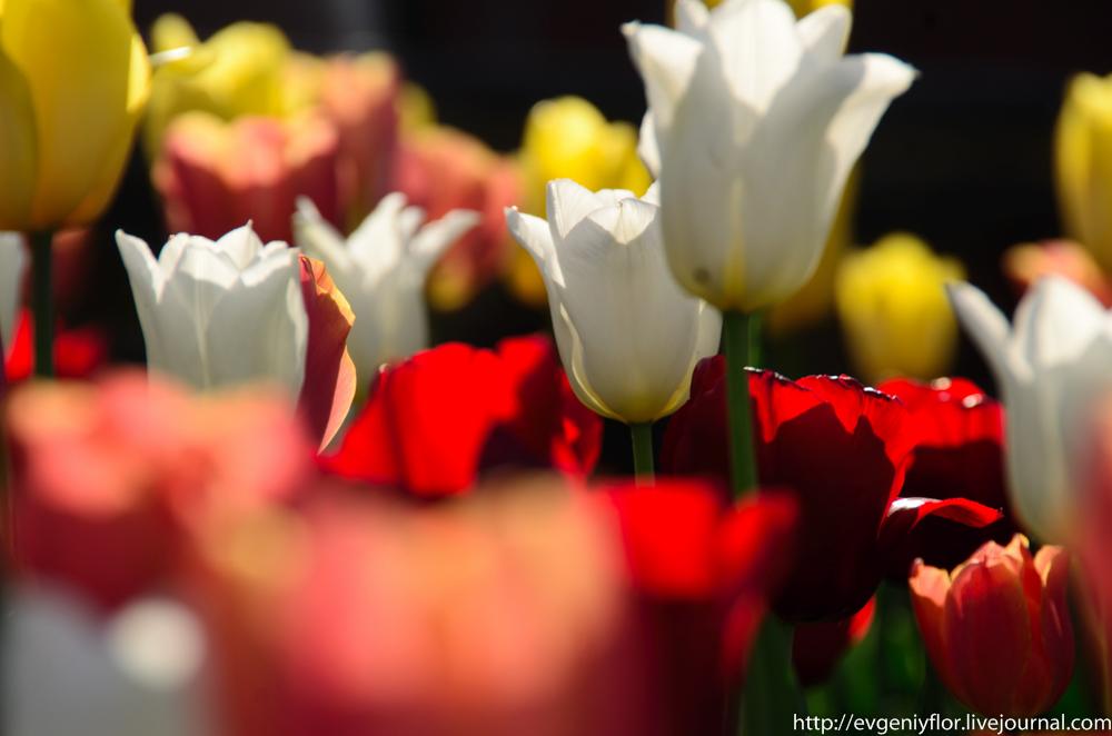 Цветы из разных мест  (14 of 19).jpg