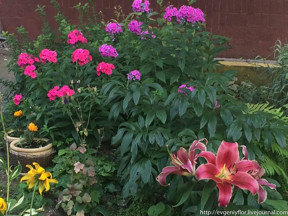 Цветы из разных мест  (17 of 19).jpg