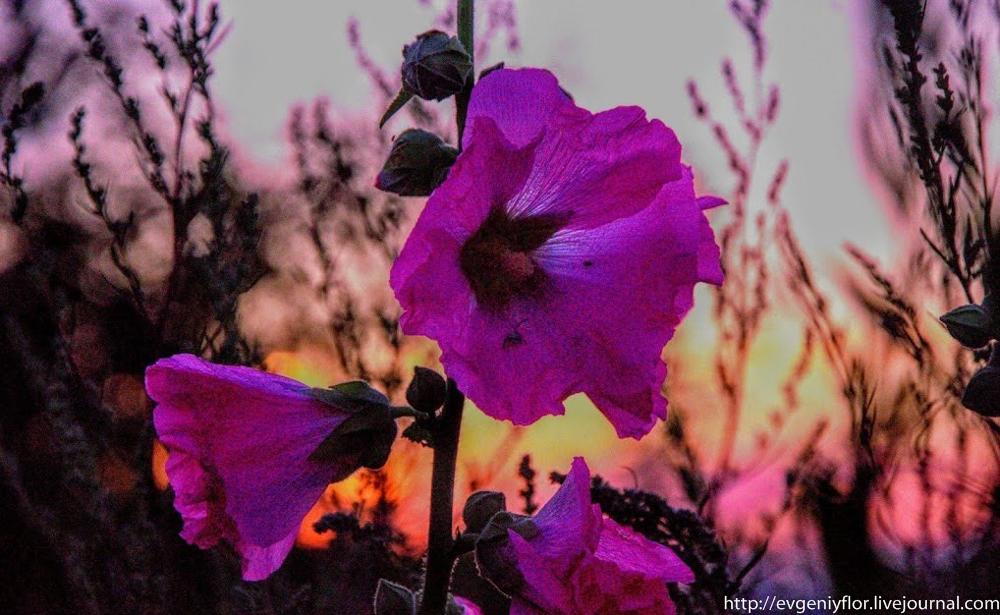 Цветы из разных мест  (19 of 19).jpg