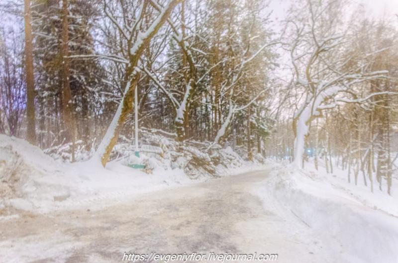 Прогулка по парку -- Отрада  --   29 - 1 - 2019 год Вторник ! (15 of 60).JPG