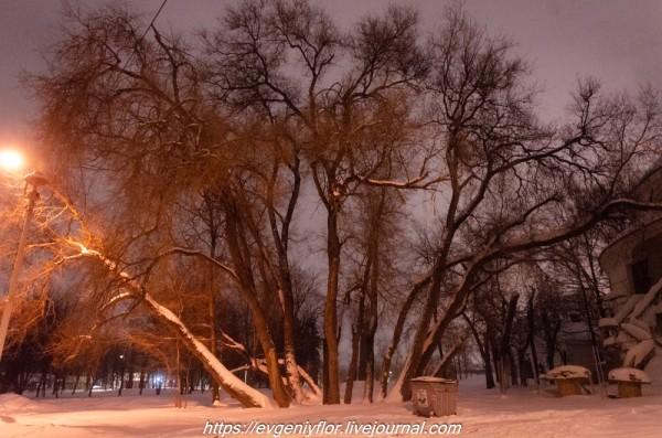 Прогулка по парку -- Отрада  --   29 - 1 - 2019 год Вторник ! (43 of 60).JPG