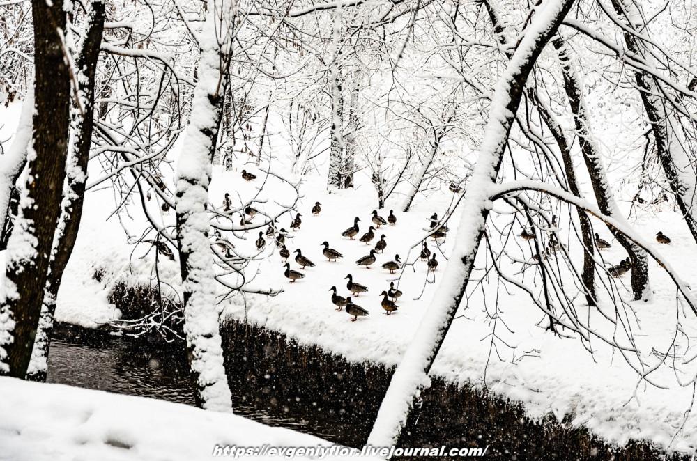 冬のLikhoborkaまたは黄河Altufana 13 02 - 2019 Среда !...2019-02-136490.jpg