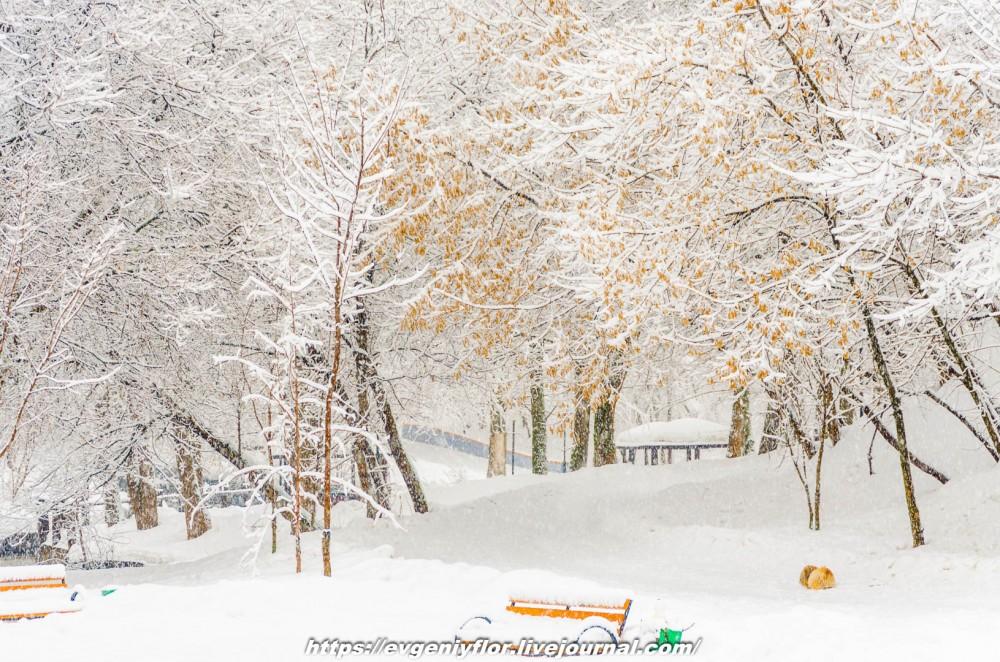 冬のLikhoborkaまたは黄河Altufana 13 02 - 2019 Среда !...2019-02-136500.jpg