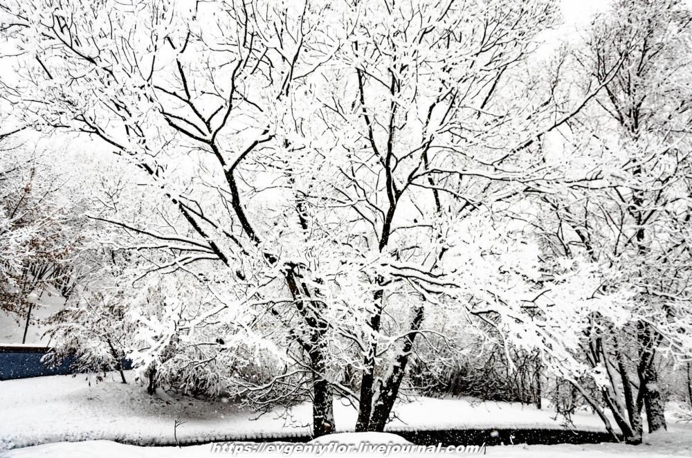 冬のLikhoborkaまたは黄河Altufana 13 02 - 2019 Среда !...2019-02-136505.jpg
