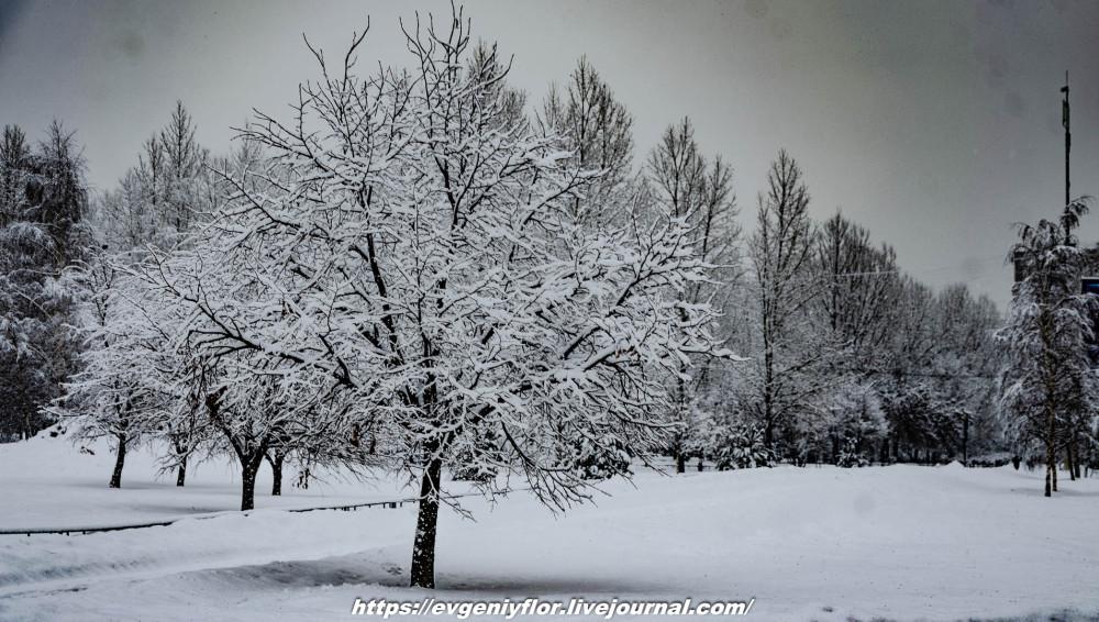 冬のLikhoborkaまたは黄河Altufana 13 02 - 2019 Среда !...2019-02-136553.jpg