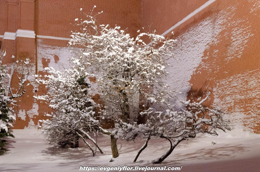 Вечерняя прогулка после снегопада    13 02 - 2019 Среда !Новая папка (2)6588.jpg