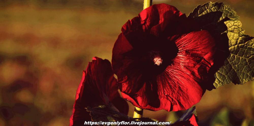 Просто красивые цветы с размытым задним фоном ...Новая папка0448.jpg