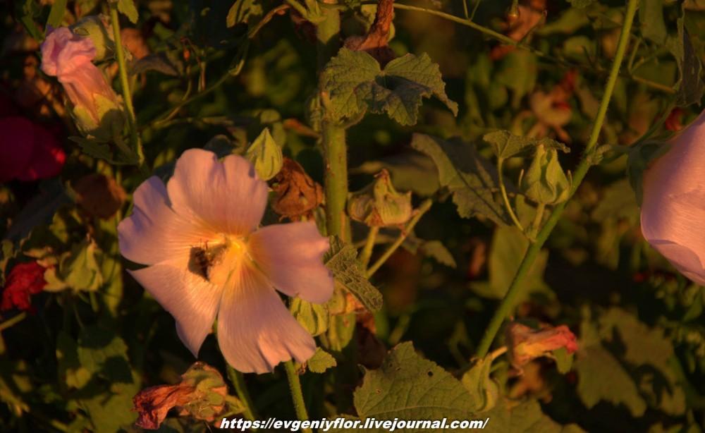 Просто красивые цветы с размытым задним фоном ...Новая папка0450.jpg