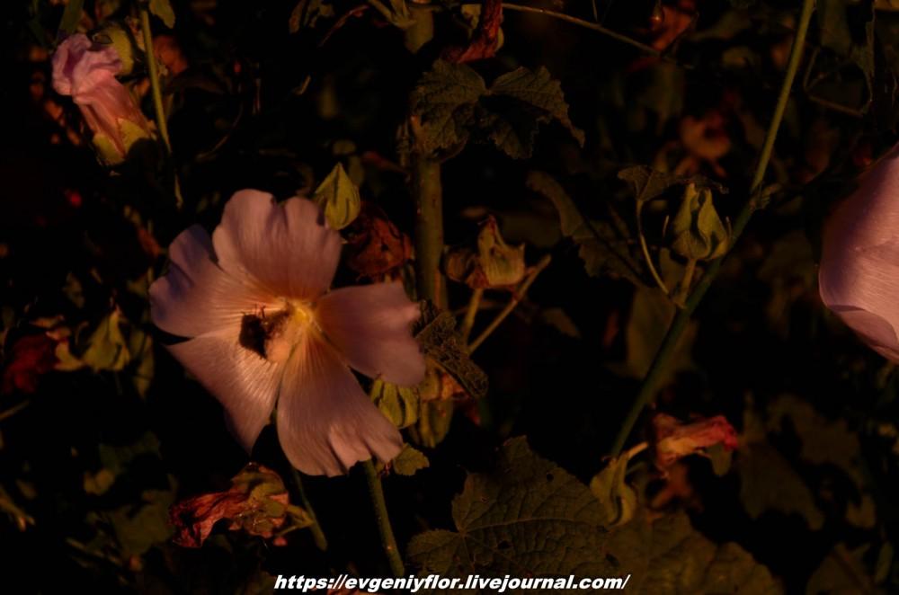 Просто красивые цветы с размытым задним фоном ...Новая папка0451.jpg