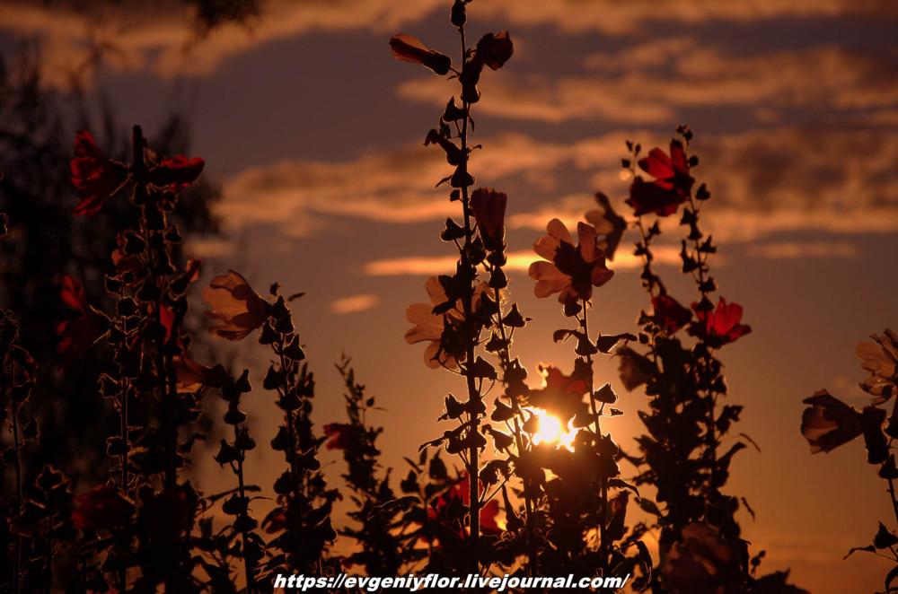 Просто красивые цветы с размытым задним фоном ...Новая папка0456.jpg