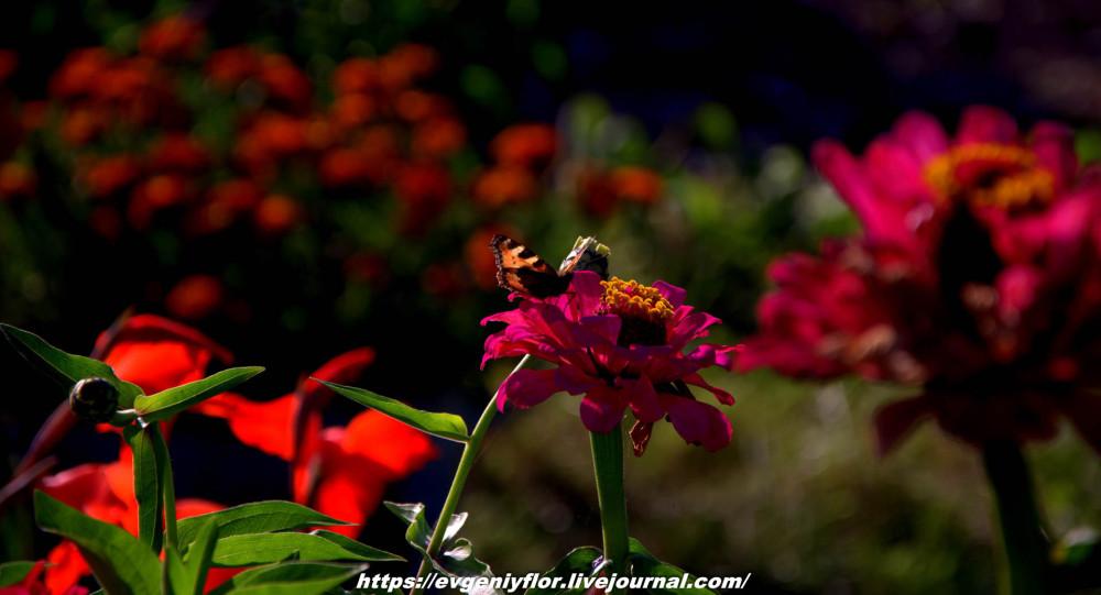 Просто красивые цветы с размытым задним фоном ...Новая папка0463.jpg