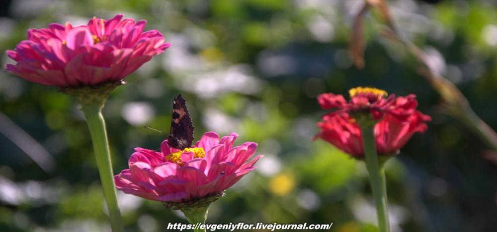 Просто красивые цветы с размытым задним фоном ...Новая папка0464.jpg