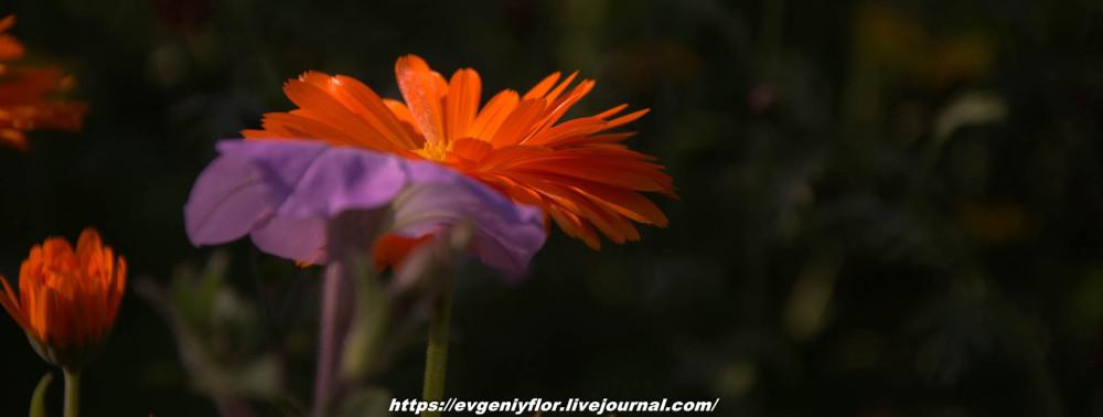Просто красивые цветы с размытым задним фоном ...Новая папка0468.jpg