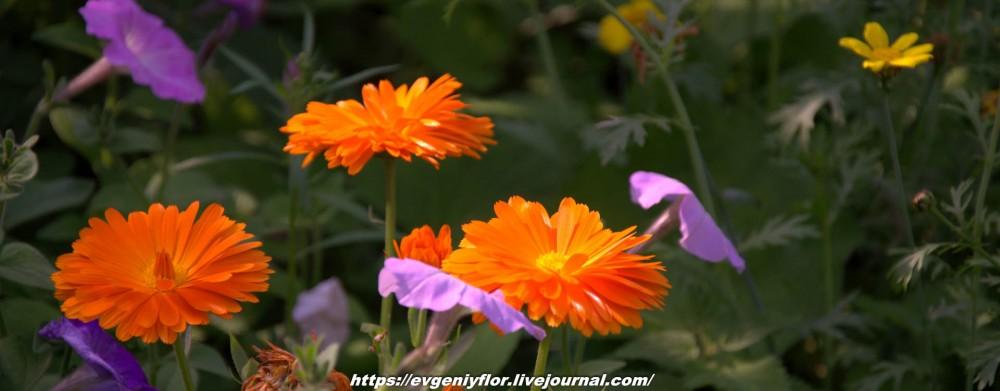 Просто красивые цветы с размытым задним фоном ...Новая папка0470.jpg