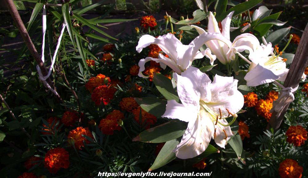 Просто красивые цветы с размытым задним фоном ...Новая папка0625.jpg