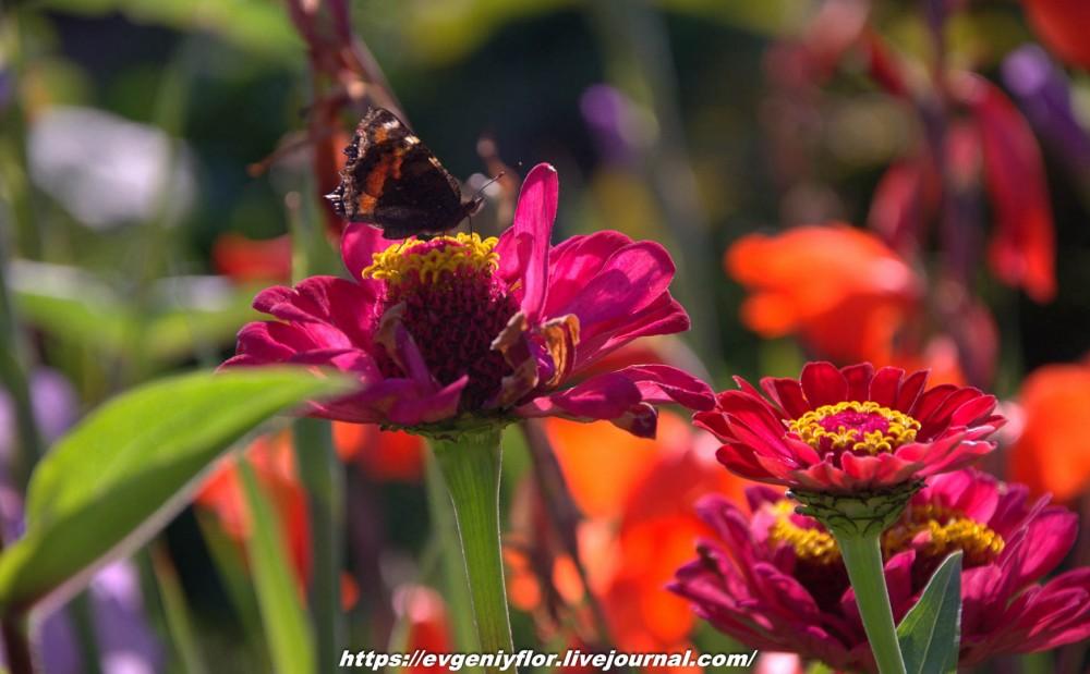 Просто красивые цветы с размытым задним фоном ...Новая папка0627.jpg