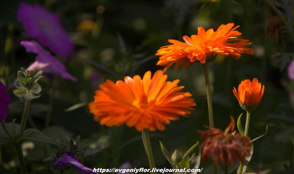 Просто красивые цветы с размытым задним фоном ...Новая папка0628.jpg