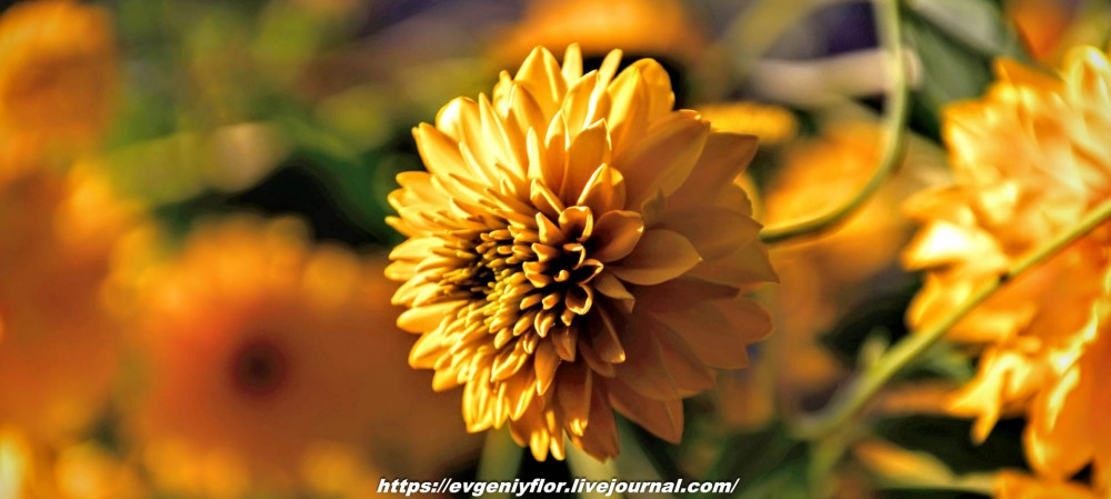 Просто красивые цветы с размытым задним фоном ...Новая папка4942.jpg