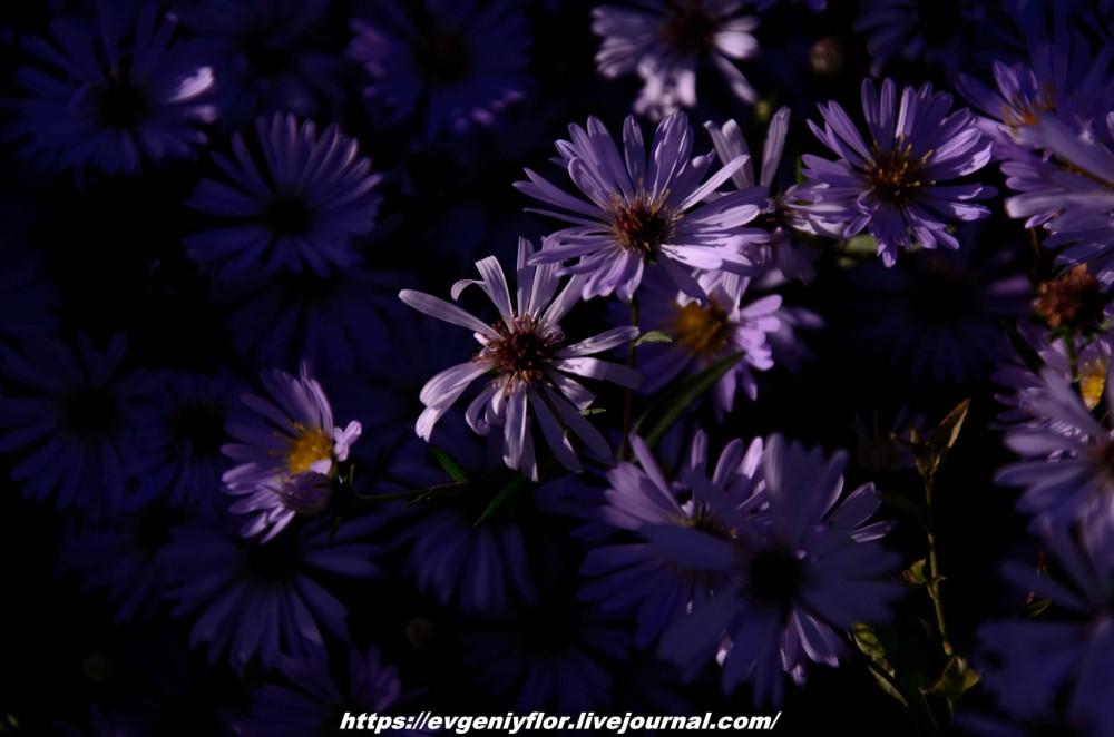 Просто красивые цветы с размытым задним фоном ...Новая папка4945.jpg