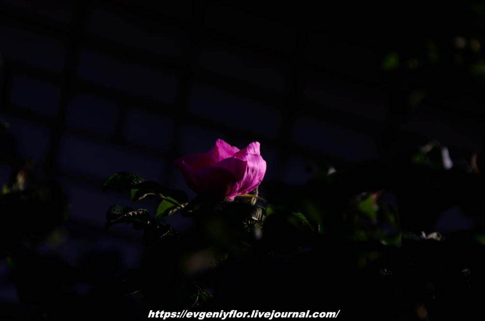 Просто красивые цветы с размытым задним фоном ...Новая папка4954.jpg
