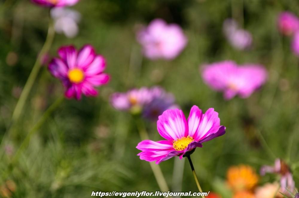 Просто красивые цветы с размытым задним фоном ...Новая папка4965.jpg