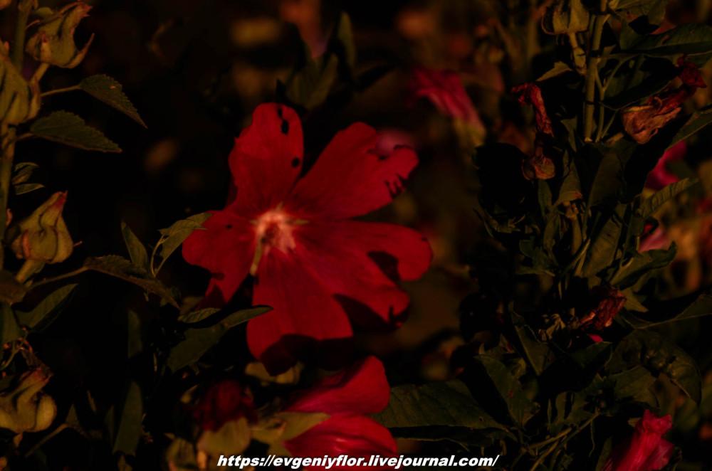 Просто красивые цветы с размытым задним фоном ...Новая папка5009.jpg
