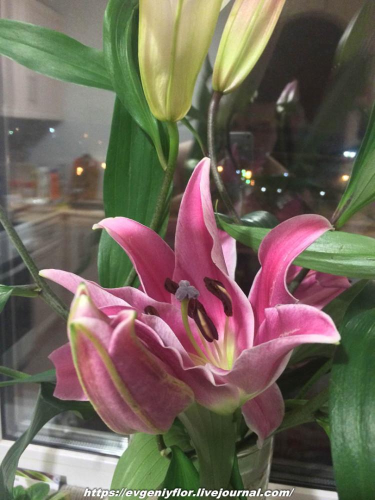 Просто красивые цветы с размытым задним фоном _2 Новая папка0742.jpg