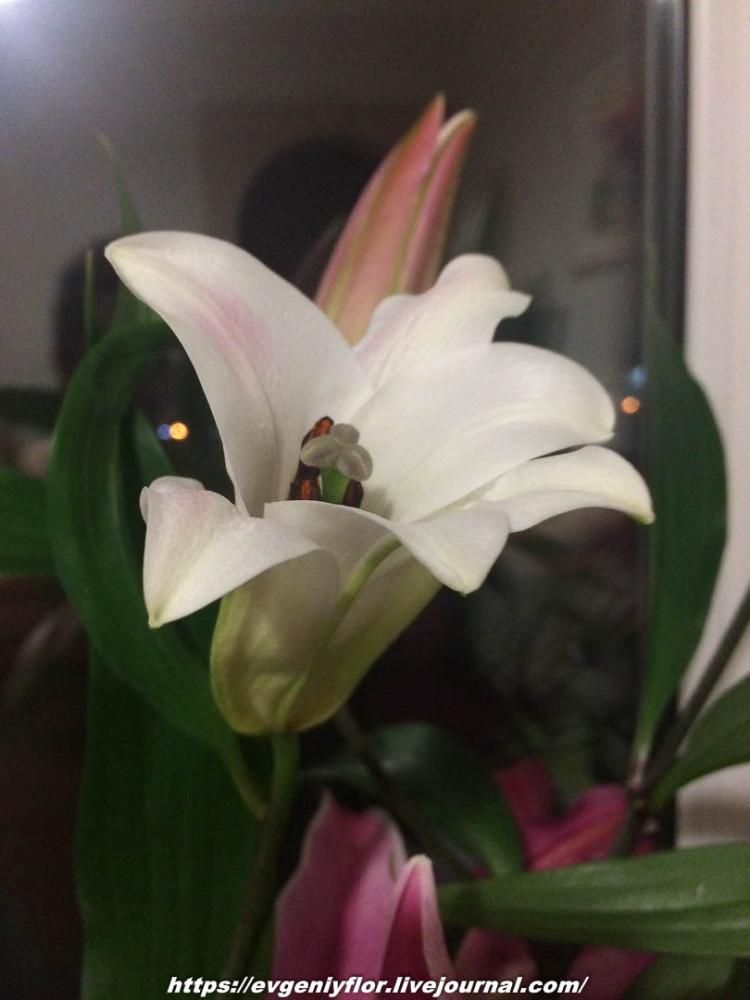 Просто красивые цветы с размытым задним фоном _2 Новая папка0745.jpg
