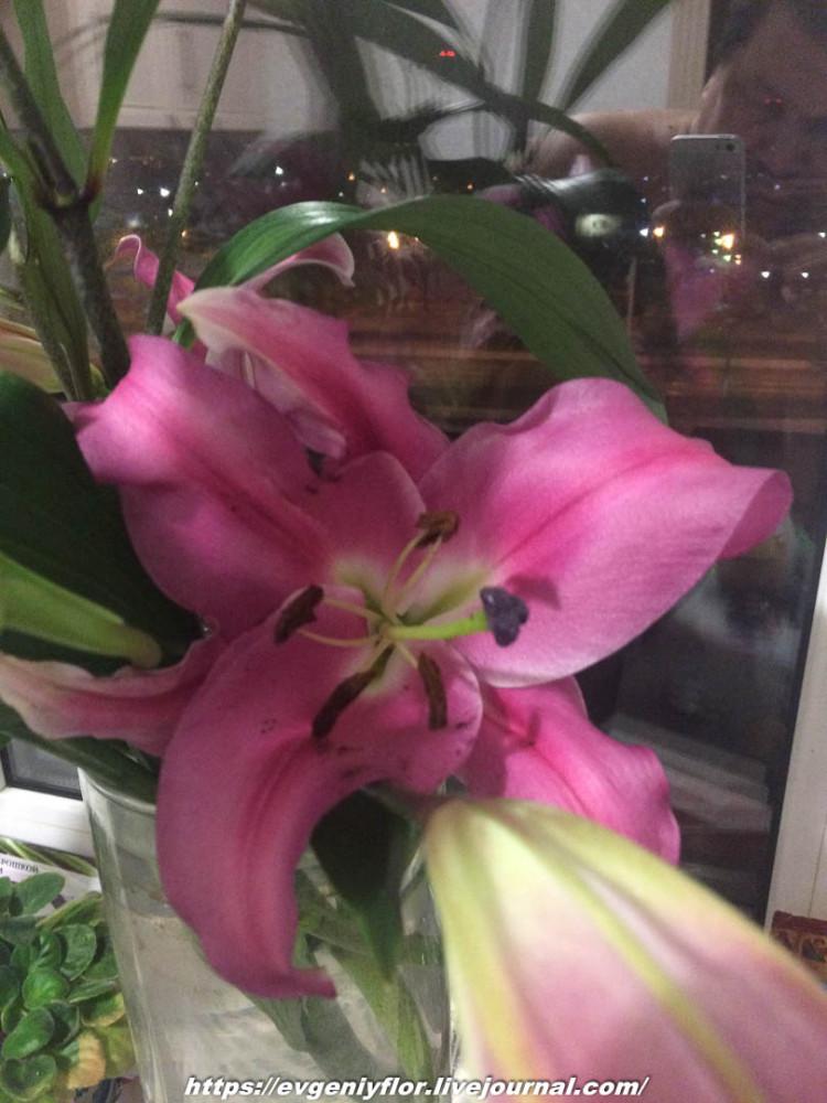 Просто красивые цветы с размытым задним фоном _2 Новая папка0748.jpg