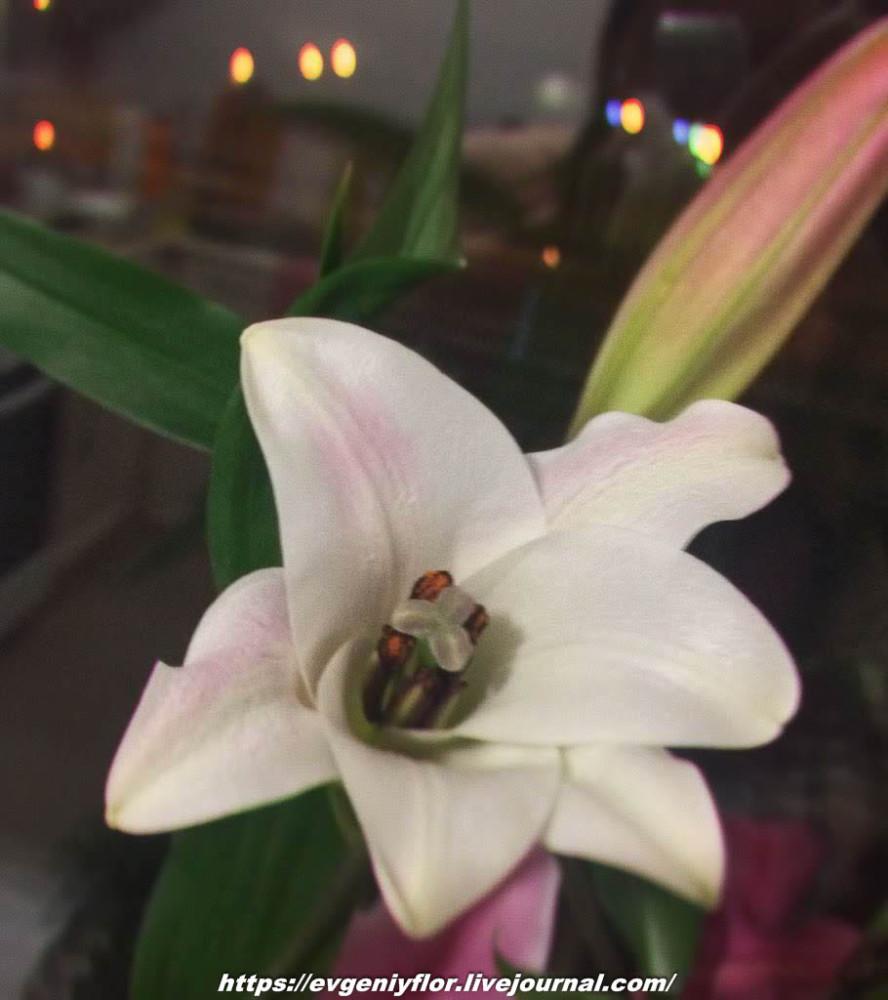 Просто красивые цветы с размытым задним фоном _2 Новая папка1071.jpg