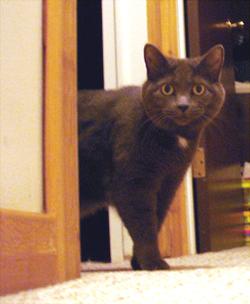 kitty takes a peek...