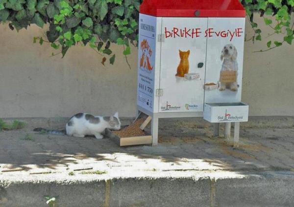 001 muni turkish-stray-cat s