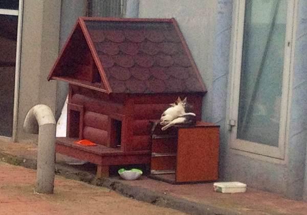 005 muni municipal-cat-house s