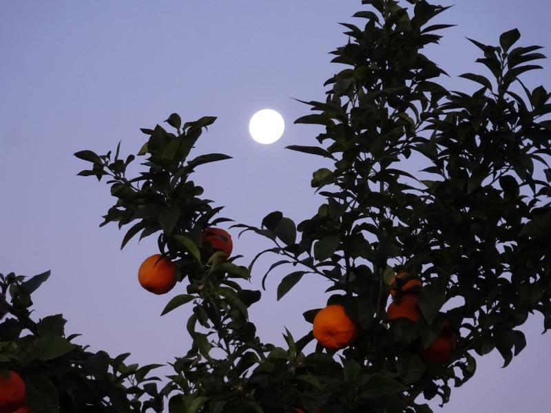 Полная луна и апельсины