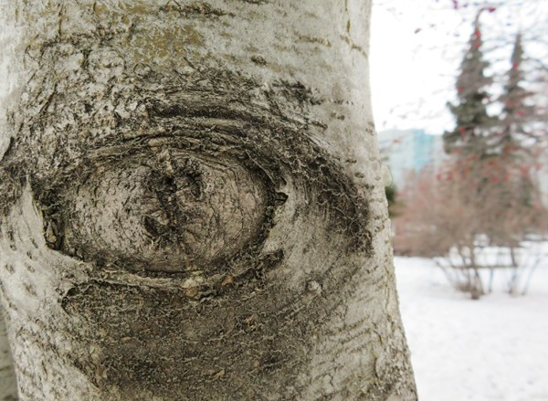 око.jpg
